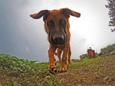 About us- Turi the Dog