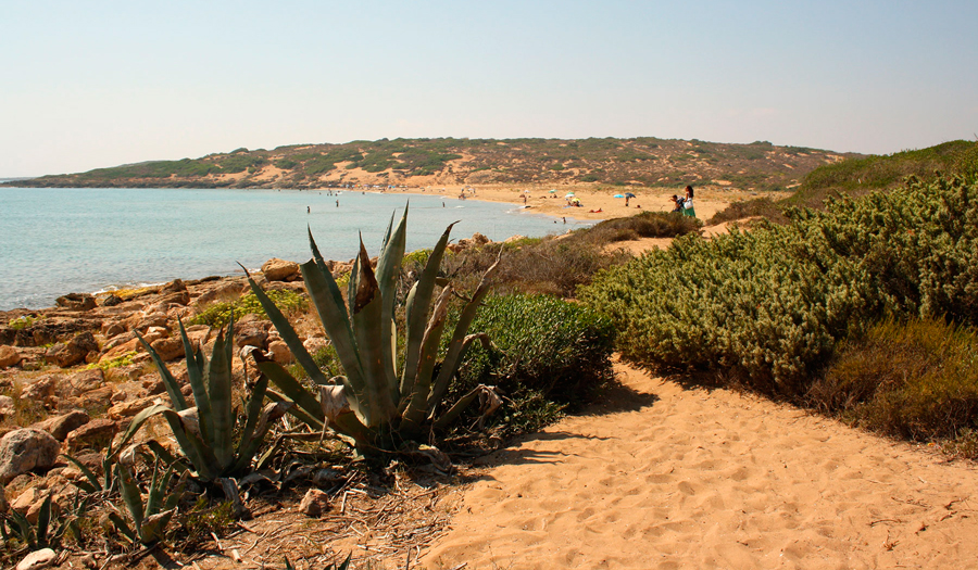 Oasis of Vendicari Nature Reserve- A local's guide to wild beaches and untouched nature