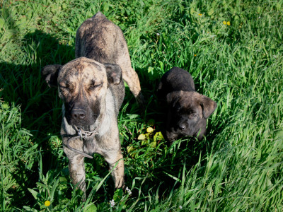 I cani di AgriMaccari